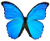 Search in MorphOS